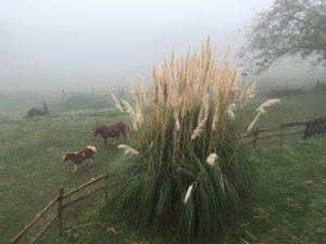 pferde-im-nebel-1